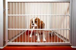 Perro en una jaula. imagen de archivo