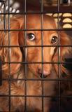 Perro en una jaula. Imagenes de archivo
