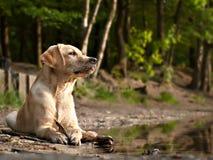Perro en una orilla fotos de archivo