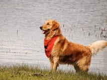 Perro en una playa imagen de archivo