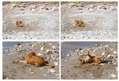 Perro en una playa Foto de archivo libre de regalías