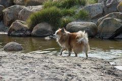 Perro en una playa arenosa Fotos de archivo libres de regalías