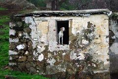 Perro en ventana Foto de archivo libre de regalías