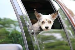 Perro en ventana del camión Foto de archivo libre de regalías