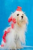 Perro encantador foto de archivo libre de regalías