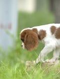perro encantador Imágenes de archivo libres de regalías