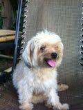 Perro encantador Foto de archivo