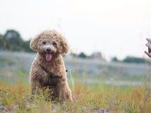 Perro encantador Imagenes de archivo