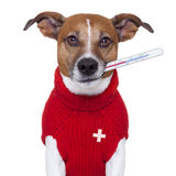 Perro enfermo Imagen de archivo libre de regalías