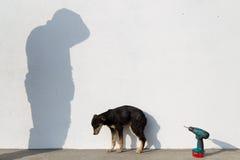 Perro enfermo Imágenes de archivo libres de regalías