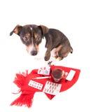 Perro enfermo con la medicina en un fondo blanco Foto de archivo libre de regalías