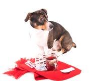 Perro enfermo con la medicina en un fondo blanco Fotografía de archivo libre de regalías