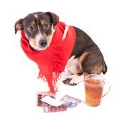 Perro enfermo con la medicina en un fondo blanco Fotografía de archivo
