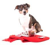 Perro enfermo con la medicina en un fondo blanco Foto de archivo