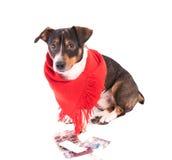 Perro enfermo con la medicina en un fondo blanco Fotos de archivo