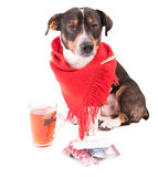 Perro enfermo con la medicina en un fondo blanco Imagen de archivo