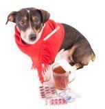 Perro enfermo con la medicina en un fondo blanco Imágenes de archivo libres de regalías