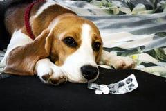 Perro enfermo con las píldoras fotografía de archivo