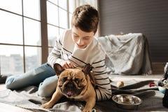 Perro enigmático que pincha encima de sus oídos Imagenes de archivo