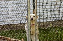 Perro enjaulado Fotos de archivo libres de regalías