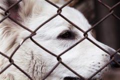 Perro enjaulado, con la cara triste perro en ojos del refugio de un animal abandonado foto de archivo