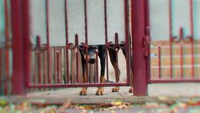 Perro enojado detrás de la cerca almacen de metraje de vídeo