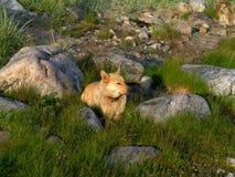 Perro entre las piedras Fotos de archivo