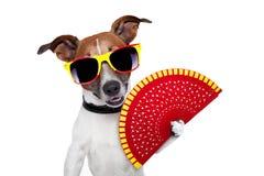 Perro español imagen de archivo