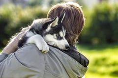 Perro esquimal del perrito en el hombro del amo Fotografía de archivo