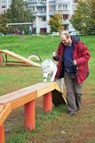 Perro esquimal siberiano con un hombre imagen de archivo libre de regalías