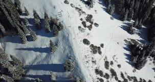 Perro esquimal y un grupo de personas que corre en una cuesta nevosa entre los árboles coníferos Gente de funcionamiento en las m metrajes