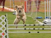 Perro estupendo Imagen de archivo libre de regalías