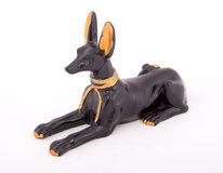 Perro faraónico Imágenes de archivo libres de regalías