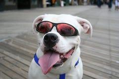Perro feliz Imagenes de archivo