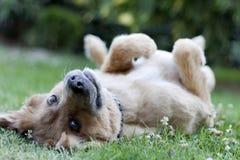 Perro feliz Fotos de archivo