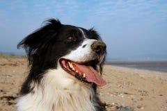 Perro feliz Imagen de archivo