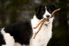 Perro feliz Imágenes de archivo libres de regalías