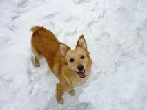 Perro feliz Fotos de archivo libres de regalías