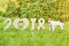 Perro feliz adorable del fox terrier en el greetin del Año Nuevo del parque 2018 Fotografía de archivo