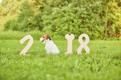 Perro feliz adorable del fox terrier en el greetin del Año Nuevo del parque 2018 Imagen de archivo