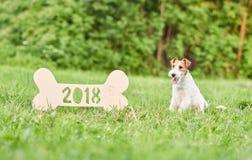 Perro feliz adorable del fox terrier en el greetin del Año Nuevo del parque 2018 Fotos de archivo