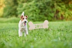 Perro feliz adorable del fox terrier en el greetin del Año Nuevo del parque 2018 Imágenes de archivo libres de regalías