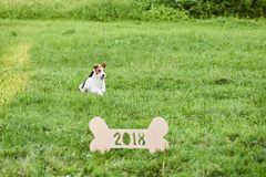 Perro feliz adorable del fox terrier en el greetin del Año Nuevo del parque 2018 Fotografía de archivo libre de regalías