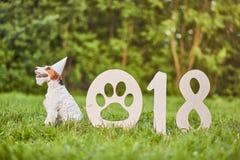 Perro feliz adorable del fox terrier en el greetin del Año Nuevo del parque 2018 Imagenes de archivo