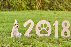 Perro feliz adorable del fox terrier en el greetin del Año Nuevo del parque 2018 Foto de archivo