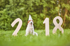 Perro feliz adorable del fox terrier en el greetin del Año Nuevo del parque 2018 Imagen de archivo libre de regalías
