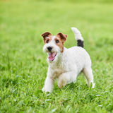 Perro feliz adorable del fox terrier en el parque imagen de archivo libre de regalías
