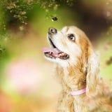 Perro feliz al aire libre que mira la abeja Imagen de archivo libre de regalías