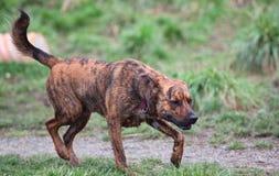 Perro feliz cerca de un agujero del fango Foto de archivo