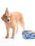 Perro feliz con el presente de cumpleaños fotografía de archivo